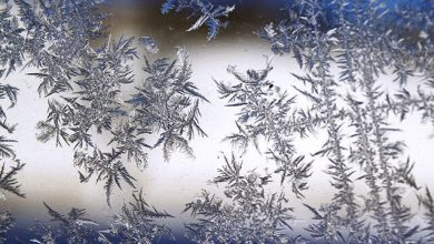 Photo of Frost caution in effect for several nights this week in Mississauga